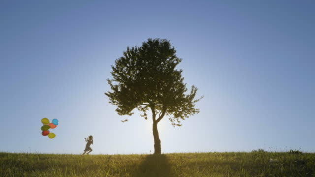 Silhouette of a Beautiful Tree on top of the Hill