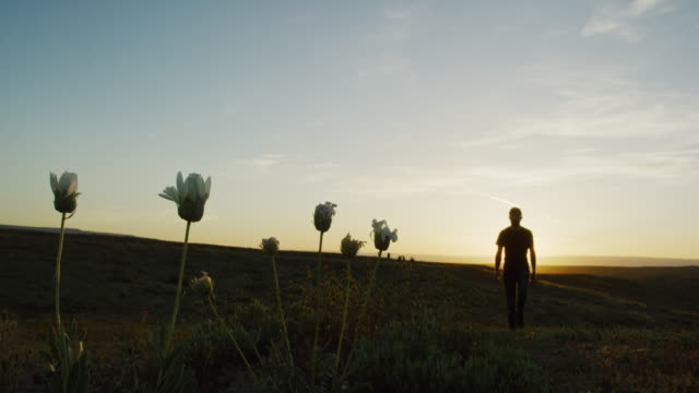 Silhouette of a Man in His Thirties Wearing a Hat Walking through Wild Desert Flowers at Sunset