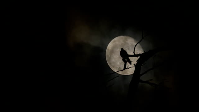 Silhouette of doves sit on the branches and full moon at night with bright and dark clouds background