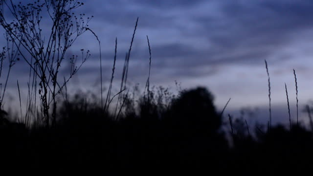 Silhouette of grass at sunset. Motorized dolly shot video
