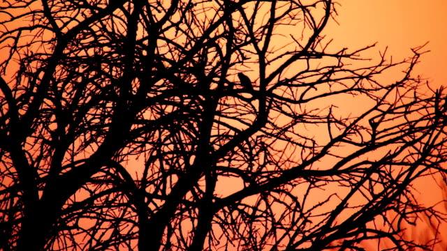Silhouette of Kestrel