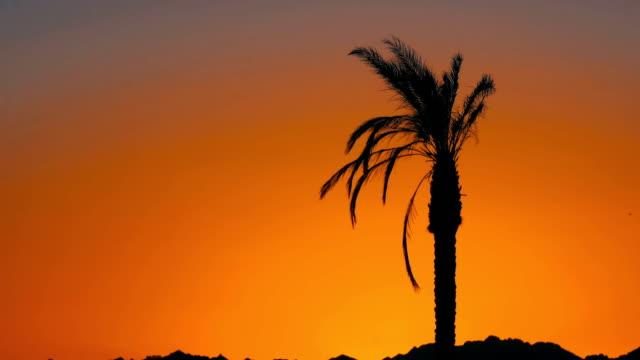 vídeos de stock e filmes b-roll de silhouette of palm tree at sunset - transatlântico