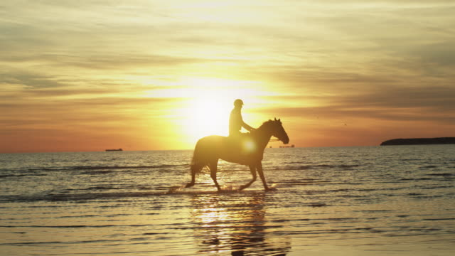 Silhouette of Rider on Horse at Beach in Sunset Light. Silhouette of Rider on Horse at Beach in Sunset Light. horseback riding stock videos & royalty-free footage