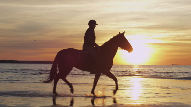 silhouette of rider on horse at beach in sunset light. - sella video stock e b–roll