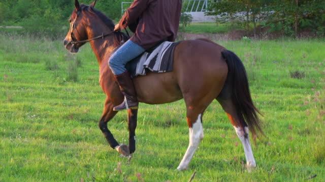 vidéos et rushes de silhouette de cavalier sur cheval au champ de terre dans la lumière du coucher du soleil. - dressage équestre
