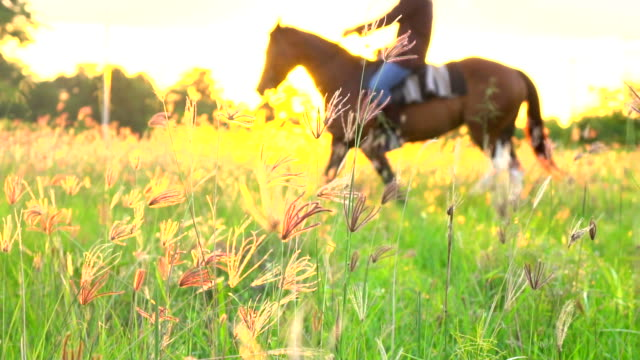 Silhouette of Rider on Horse at Land Field in Sunset Light. Silhouette of Rider on Horse at Land Field in Sunset Light.(Slow Motion) horseback riding stock videos & royalty-free footage