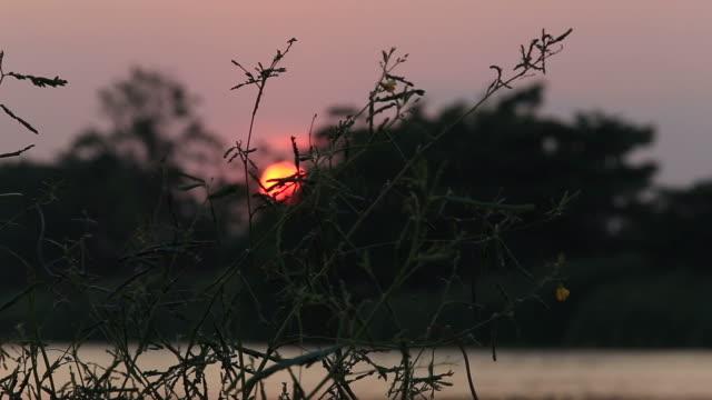 vídeos de stock, filmes e b-roll de silhueta de árvores que balançam com o vento - clipe
