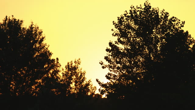 Silhouette of trees at sunset. video