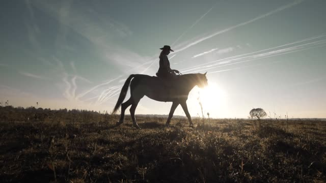 Silhouette of woman riding horse in field. Beautiful cowgirl at brown horse Silhouette of woman riding horse in field. Beautiful cowgirl at brown horse in slow motion outdoors. Wide angle cowgirl stock videos & royalty-free footage