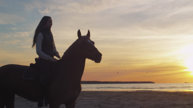 Silhouette of Young Rider on Horse at Beach in Sunset Light. video