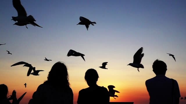 Silhouette people and bird at beautiful sunset