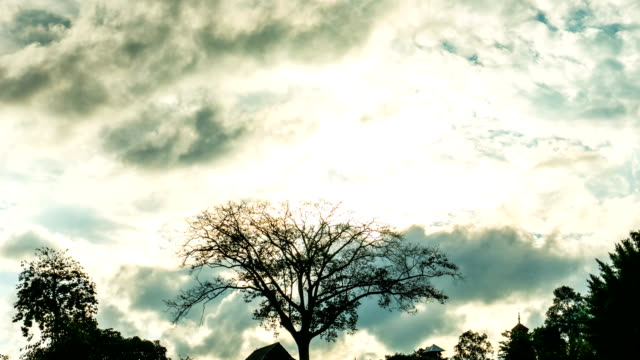 silhouette scene of bare tree and cloudy sky, time lapse video - albero spoglio video stock e b–roll