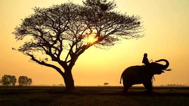 Silhouette-Szene von Elefanten und Mahout auf den Nebel Sonnenaufgang. – Video