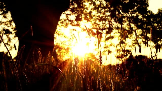 Silhouette Summer Tree video