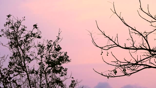 silhouette tree and dry branch tree in sunset sky