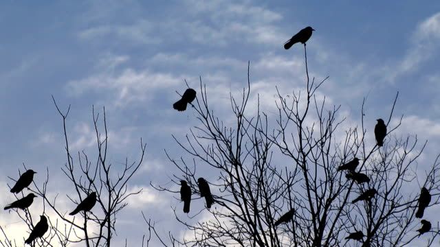 Silhouetted Crows and Clouds video