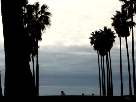 Silhouetted Skateboarder Passes Palm Trees