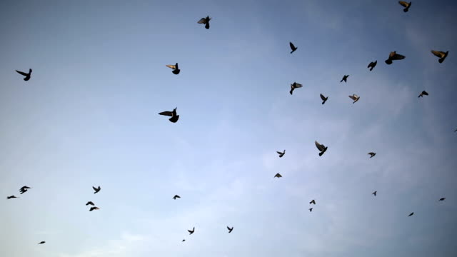 silhouettes of birds flying on the blue sky - colombaccio video stock e b–roll