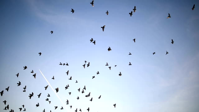 Silhouettes of birds flying on the blue sky Silhouettes of birds flying on the blue sky group of animals stock videos & royalty-free footage