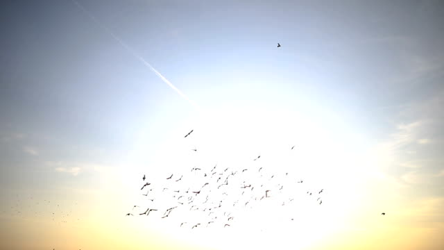 Silhouettes of birds flying on the blue sky