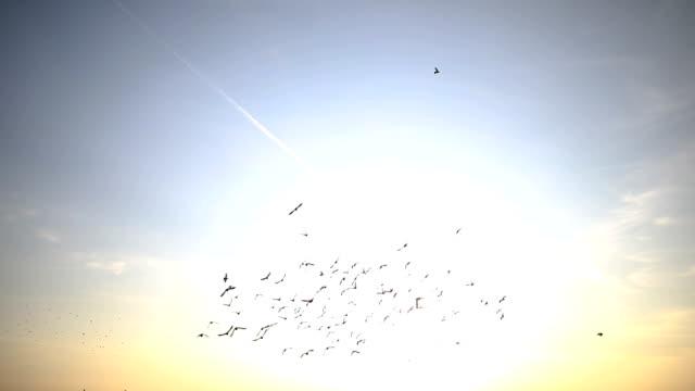 vídeos de stock e filmes b-roll de silhouettes of birds flying on the blue sky - pombo pássaro