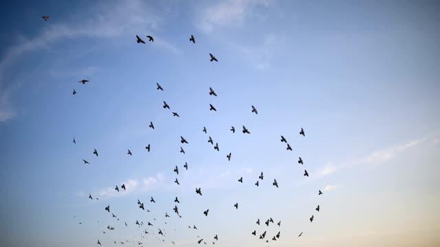 青空を飛ぶ鳥のシルエット - 鳥点の映像素材/bロール