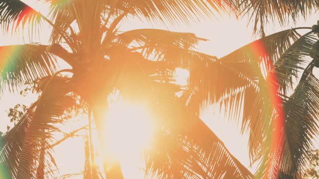 vidéos et rushes de silhouettes des palmiers se balançant dans le vent avec le coucher du soleil. - arbre tropical