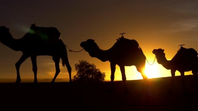 Silhouettes of walking camels at sunset. Caravan in sahara desert. 4K, UHD