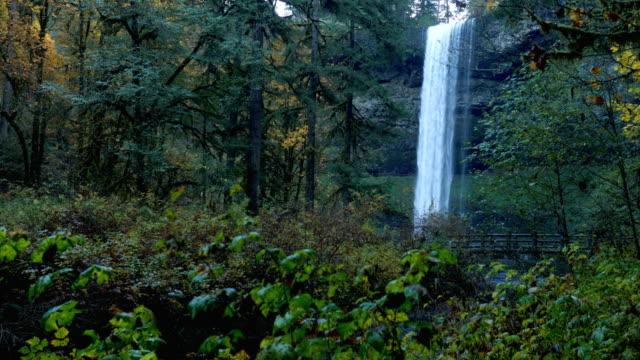 silver falls, oregon - nationalpark bildbanksvideor och videomaterial från bakom kulisserna