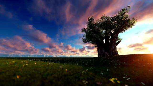einzelne baobab-baum auf einen wunderschönen sonnenuntergang - affenbrotbaum stock-videos und b-roll-filmmaterial