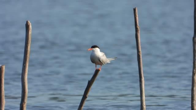 Single bird on wooden stake