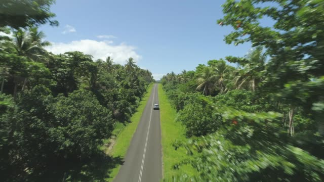 AERIAL: Single car drives down straight road leading through the sunlit jungle. video