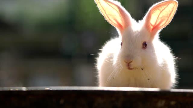 Single rabbits video