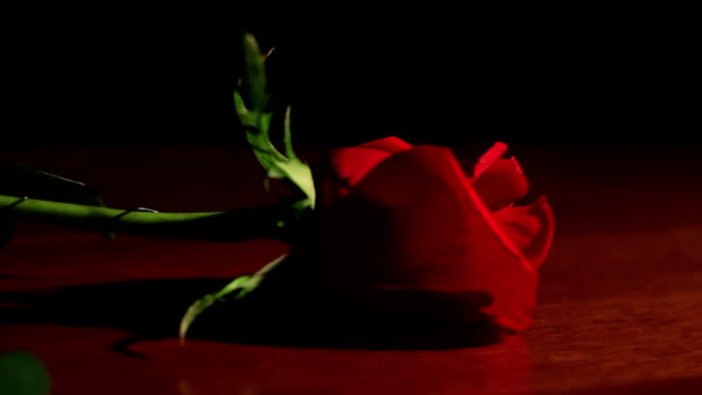 Single red rose on wood table dolly video
