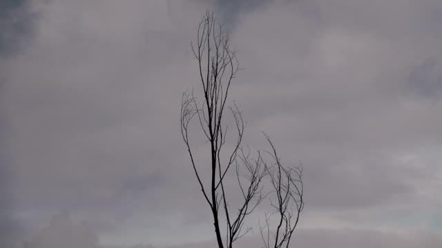 single tree against a gloomy sky. - albero spoglio video stock e b–roll