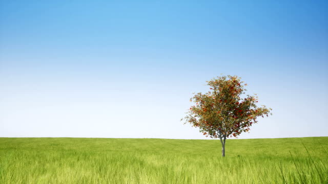 Single tree and green field on clear sky video
