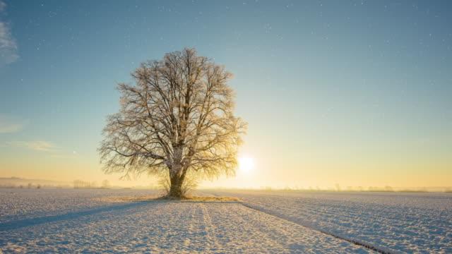 t/l baum bei sonnenaufgang im herbst und winter - vier jahreszeiten stock-videos und b-roll-filmmaterial