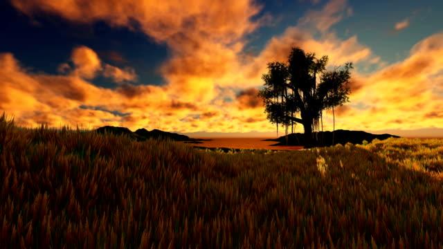 Single Tree At Sunset On Wheat Field video