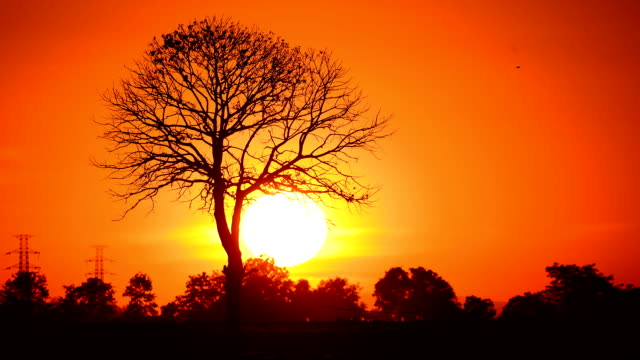 Single tree at sunset Time Lapse