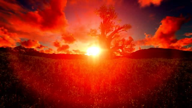 Single Tree In Sunset African Heat video