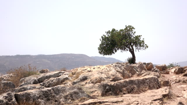 Single Tree on Top of Mountain in Israel video