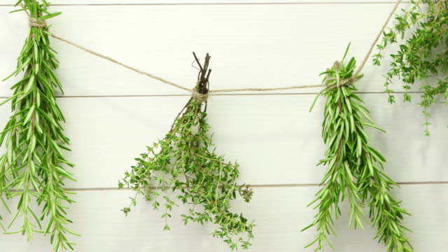 Single twigs of Thyme and Rosemary video