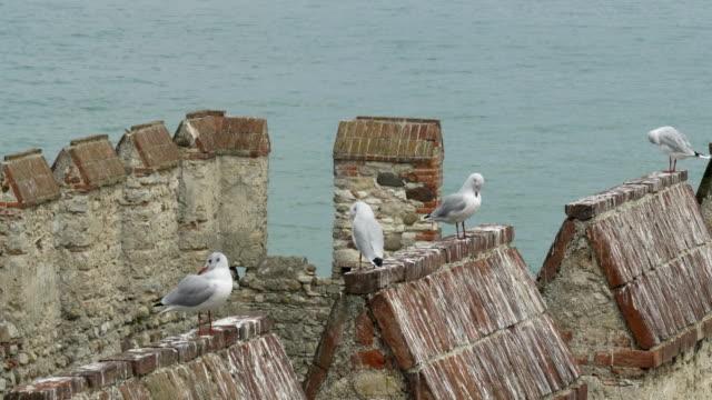 Sirmione Castle Battlements Pigeons video