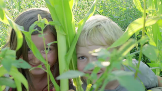 Sister and brother play in corn field -Uberstock- HD 1080p-  A cute little boy gets tickled by his older sister while they pay in a corn field.  Close up shot. side lit stock videos & royalty-free footage