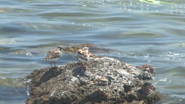 Six birds on the stone - HD 30F video