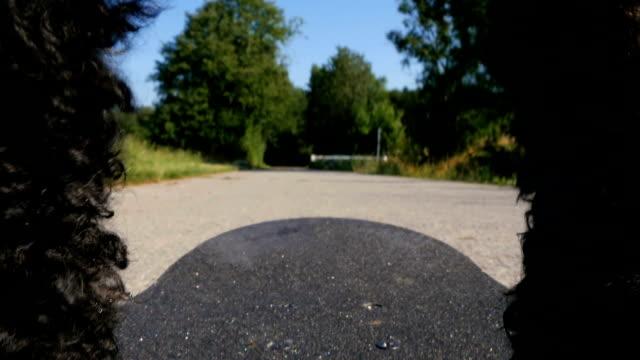 skateboarding dog (poodle) - трюк стоковые видео и кадры b-roll