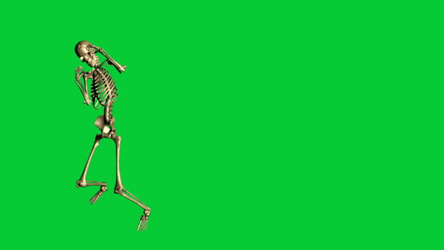 skeleton boxing  - separate on green screen 3d animation of skeleton boxing  - separate on green screen animal skeleton stock videos & royalty-free footage