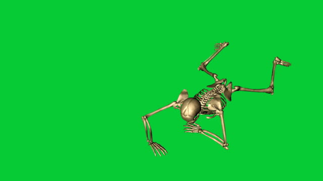 skeleton crawl and  throw grenade   - separate on green screen 3d animation of skeleton crawl and  throw grenade   - separate on green screen animal skeleton stock videos & royalty-free footage