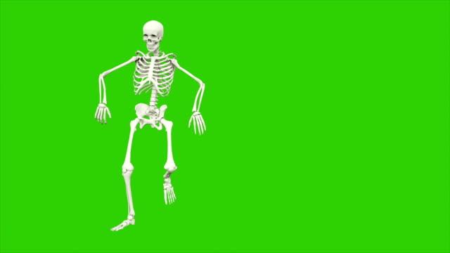 skeleton dancing. seamless loop animation on green screen. - potwór filmów i materiałów b-roll