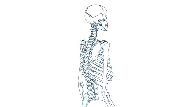 skeleton draw A drawing of a human skeleton on white background with matte animal skeleton stock videos & royalty-free footage